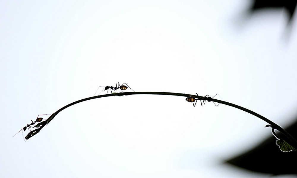 Eliminare formiche dalla cucina