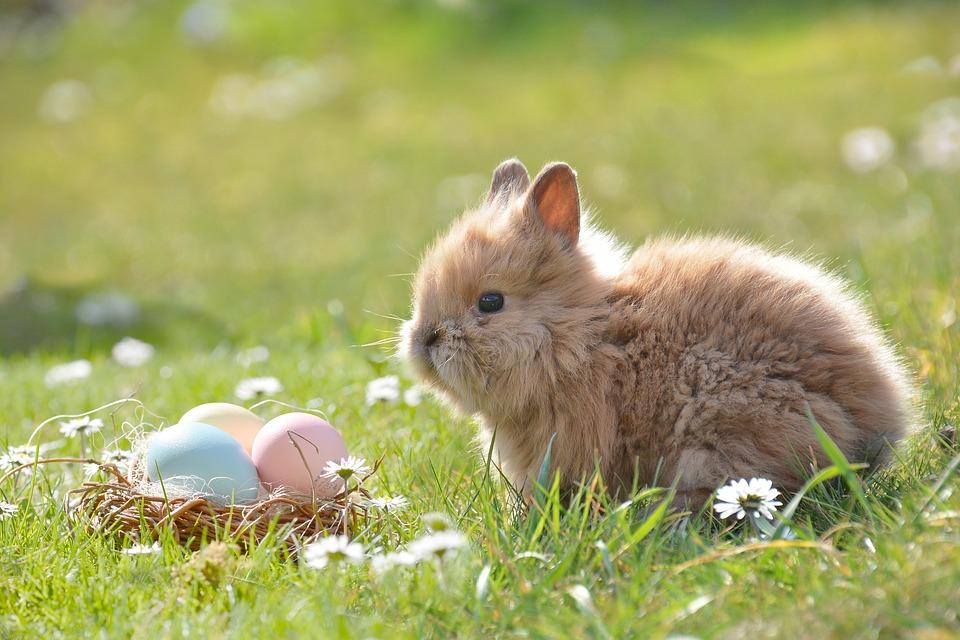 Come determinare la data della Pasqua ogni anno