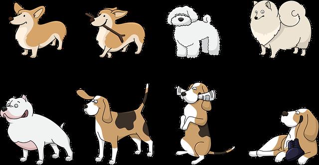 Accessori per il cane ecco tra quali scegliere