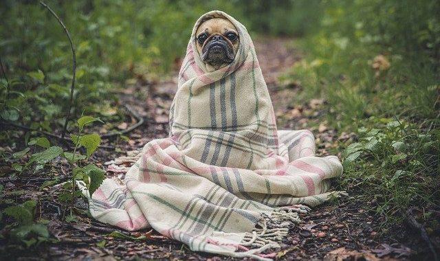Recinto per cani: cos'è e dove trovare il migliore