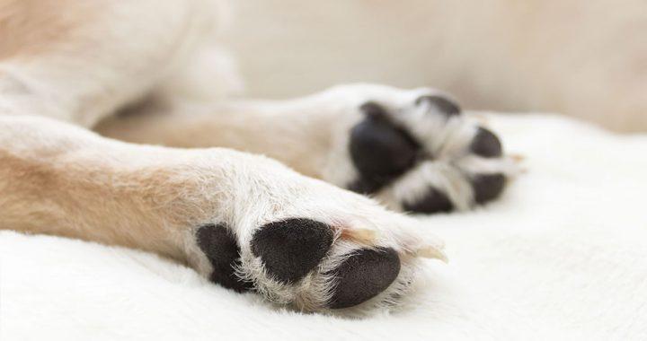 Le 8 domande più comuni sull'osteoartrite di cane e gatto