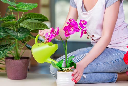Come si concimano le orchidee?